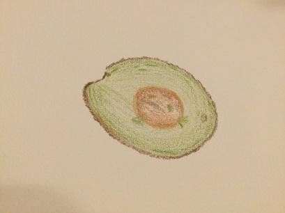 Avocado door Cristina